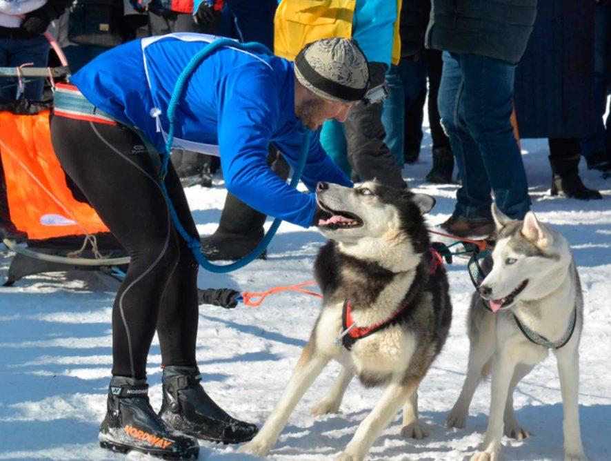 В Воронеже прошли соревнования ездовых собак